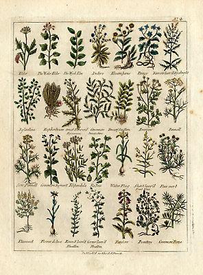 antique-herbal-print-elder-fennel-endive-culpeper-1790-e400797bb85ec9d8e148d53ae2034cfc